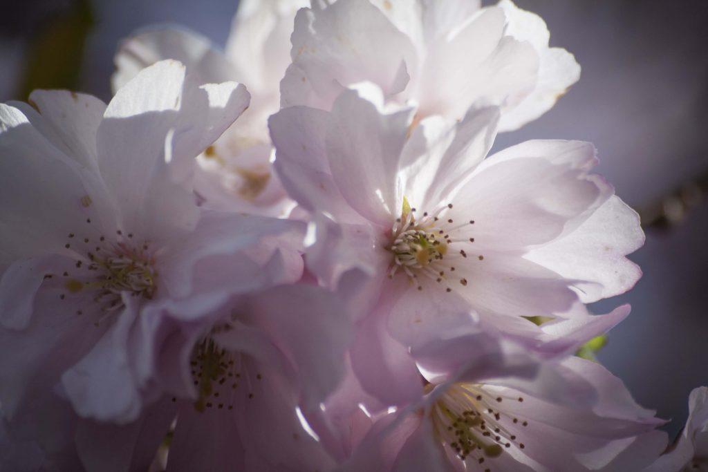 blomster7